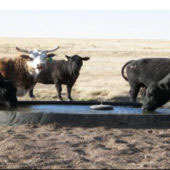 TD1000 Integral Part of Water Shortage Solution for Cattle Ranches